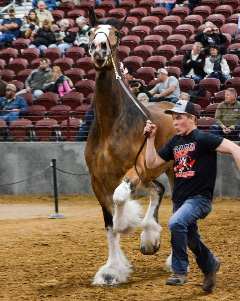 2018 National Clydesdale Sale